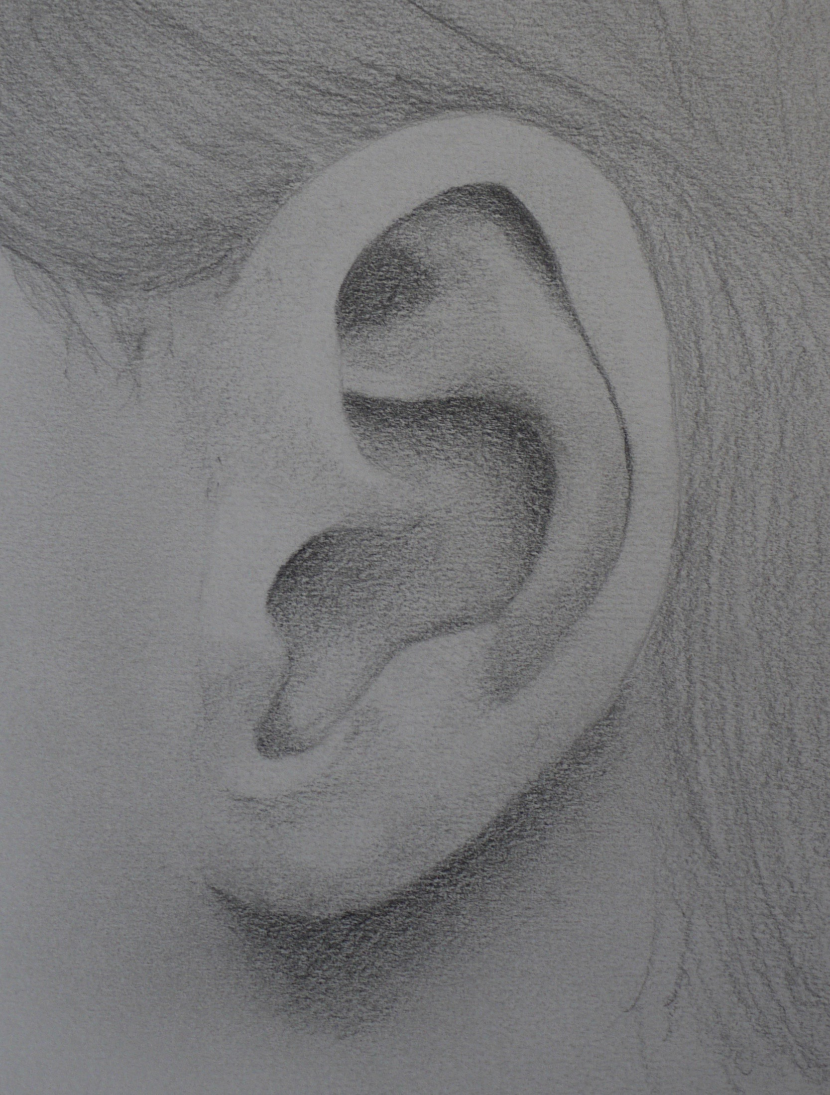 Detail of an Ear