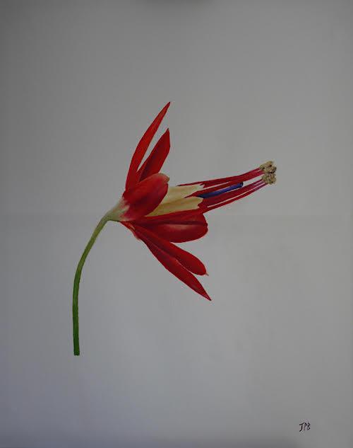 Flower by John Blundell